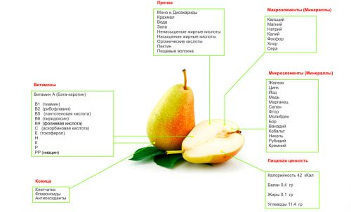 Полезный состав груши
