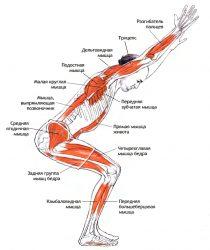 Поза стула в йоге или Уткатасана для укрепления здоровья