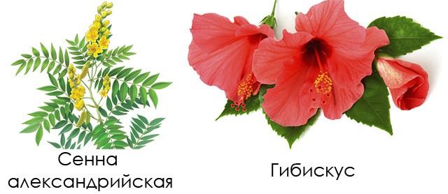 Сенна александрийская и гибискус