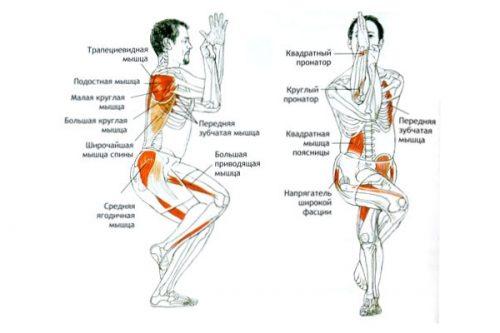 Мышцы в работе при Гарудасане