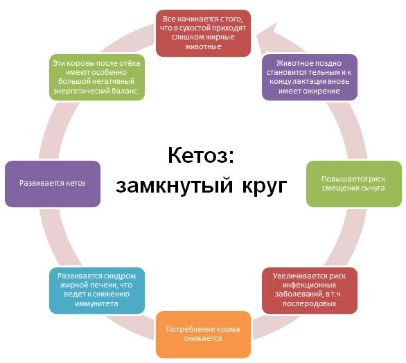 Круг кетоза