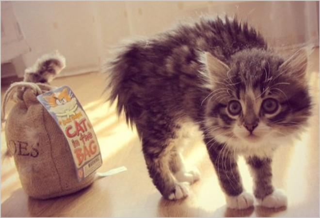 Отек легких у котов и кошек: своевременная диагностики и лечение