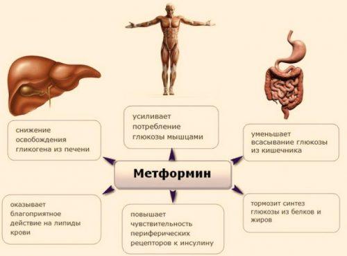 Свойства Метформина
