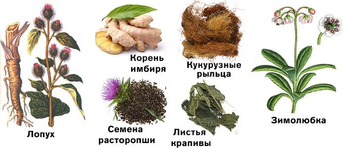 Жиросжигающие растения