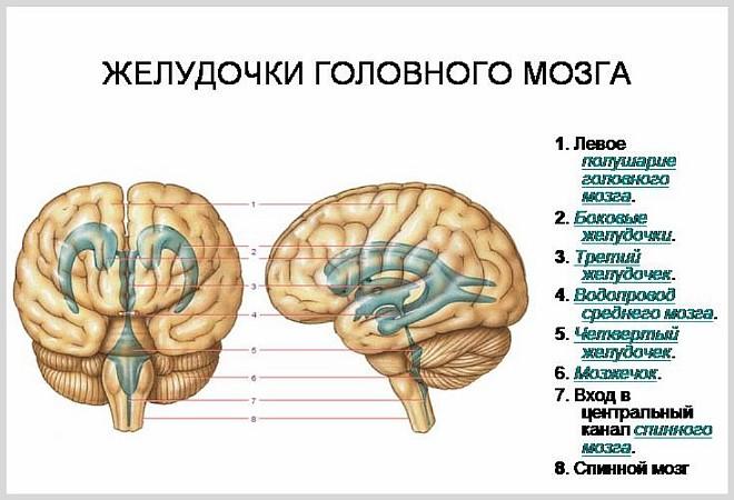 Почему увеличены желудочки головного мозга у грудничка