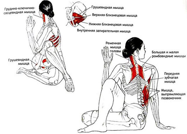 Мышцы, задействованные при Маричиасане